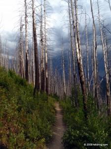 Highline Trail 49